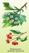 Боярышник (ягоды), 50 гр