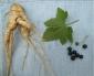 Переступень белый (корень), 30 гр